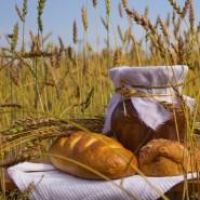 Программа «Хлеб – всему голова!» фотографии