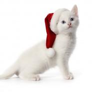Новогодняя сказка «Снежный кот» фотографии