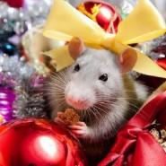 Праздник «Мышкины посиделки» фотографии