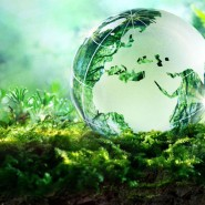 Экологическое путешествие «Зелёный мир» фотографии