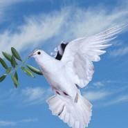 Встреча «Нам нужен мир! Это забыть нельзя» фотографии