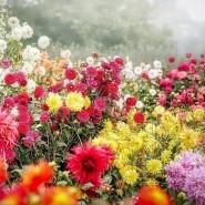 «Музыка цветов» - игровая программа фотографии