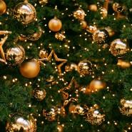 Программа «Новогодний переполох» фотографии