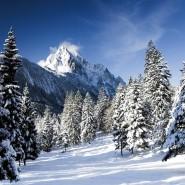 Программа «Кто зимой в лесу живет?» фотографии