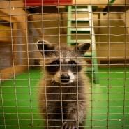 Zoo-mini фотографии