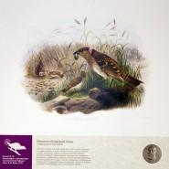 Выставка «Мир удивительных птиц и грациозных кошек» фотографии