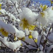 Виртуальная программа «Как февраль с мартом встретились» фотографии