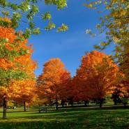 Викторина «Золотая осень» фотографии