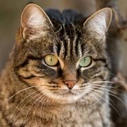 Всемирный день кошек фотографии