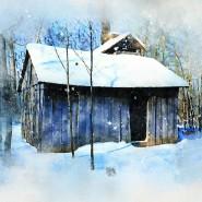Выставка «Зимушка-зима» фотографии