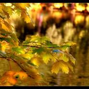 Встреча «Осенние грезы» фотографии