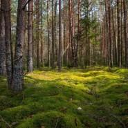 Эколого-краеведческая игровая программа «Лесные тайнички» фотографии