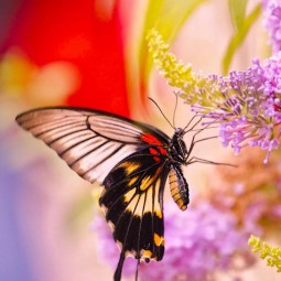 Интерактивная экологическая игра «Поле чудес «Бабочки летают»