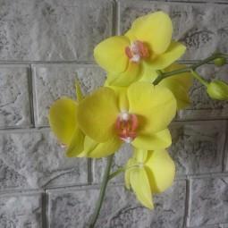 Видеобеседа «Удивительные растения мира»