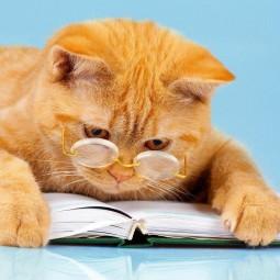 «Гуляют кошки по страницам»-сюжетно-ролевая игра