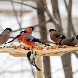 Мастер-класс «День встречи зимующих птиц»