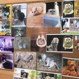 «Всемирный день кошки»–фотовыставка