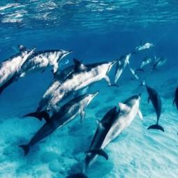 Познавательная программа «Тайны моря–
