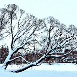 Виртуальный мастер-класс «Зимнее дерево»