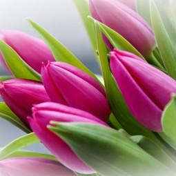 Онлайн концерт «8 марта – день любви и красоты»