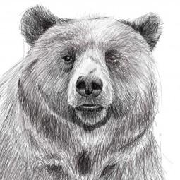 Спектакль «Медведь»