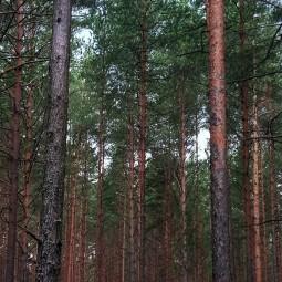 Видеорассказ «Обитатели леса. Медведь»