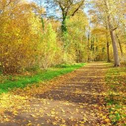 Онлайн-показ картины «Осеенний лес»