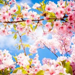 Показ видеозаписи исполнения песни «О той весне»