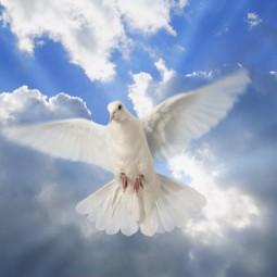 Встреча «День мира»
