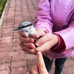 «Птицы моего двора»