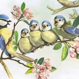 Экологическая онлайн-викторина «Познакомься – это птицы»