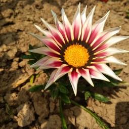 Виртуальная выставка фотографий «Цветы лета»