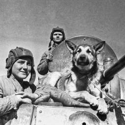 Виртуальная выставка «Животные – герои Великой Отечественной войны»
