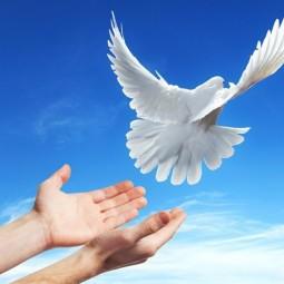 Программа «И взлетает белокрылый голубь мира с наших рук»