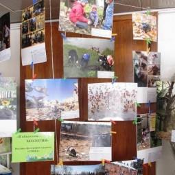 Выставка «В объективе – экология»
