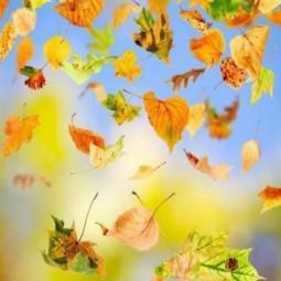 «Осенние фантазии»