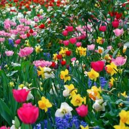 Выставка картин «Цветы нам дарят настроение»