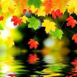 Студия творчества «Осенний листопад»