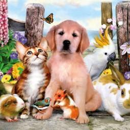 «Животные-наши друзья»