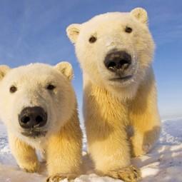 Встреча «День рождения белого медведя»