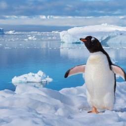 Виртуальный мастер-класс «Пингвин на льдине»
