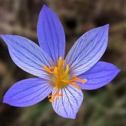 Онлайн мастер-класс «Цветы нам дарят настроенье»