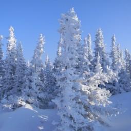 Виртуальная встреча «Зимние месяцы»