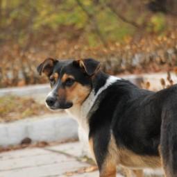 Видеоурок «Как вести себя при нападении собак»