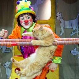 Спектакль «Танцующие кошки»