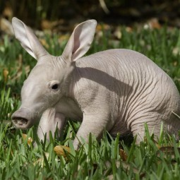 Онлайн беседа «Необычные животные мира»