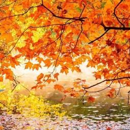 Викторина «Следом за летом осень идет»