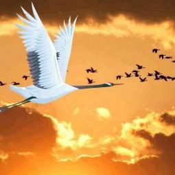 «Праздник белых журавлей»
