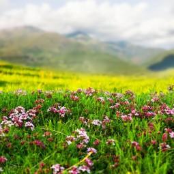 Праздник «Цвети, село моё родное»
