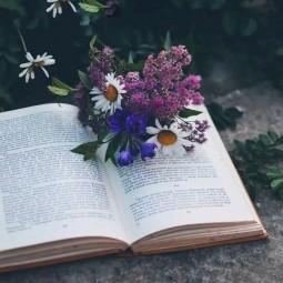 Викторина «Цветочный переполох»